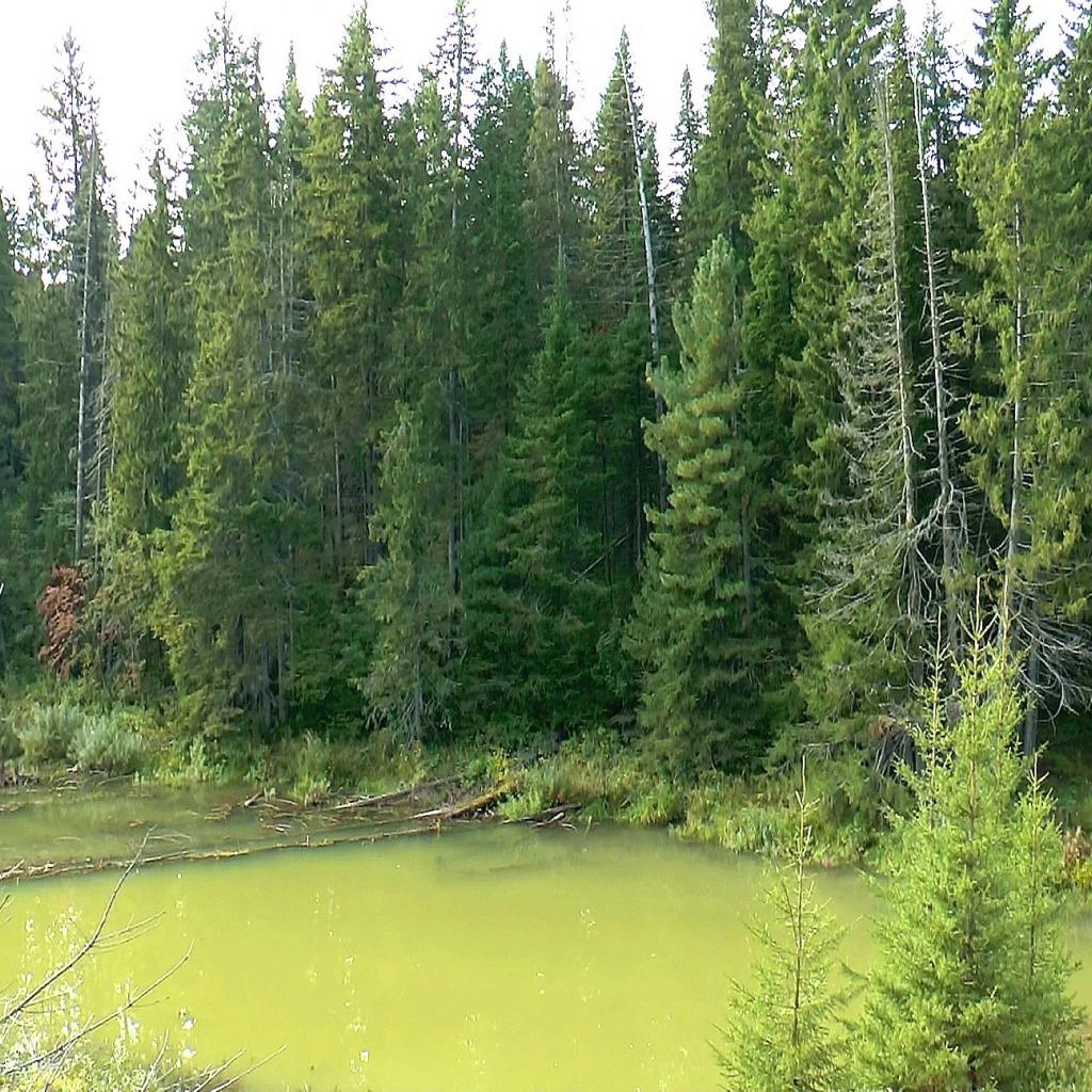 Картинки тайга лес