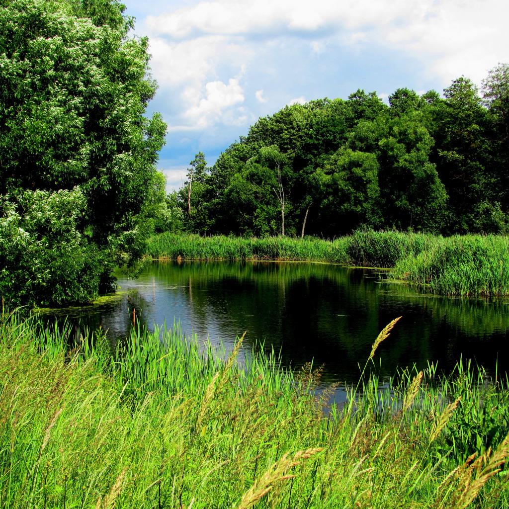 Картинки природы летом лес озеро