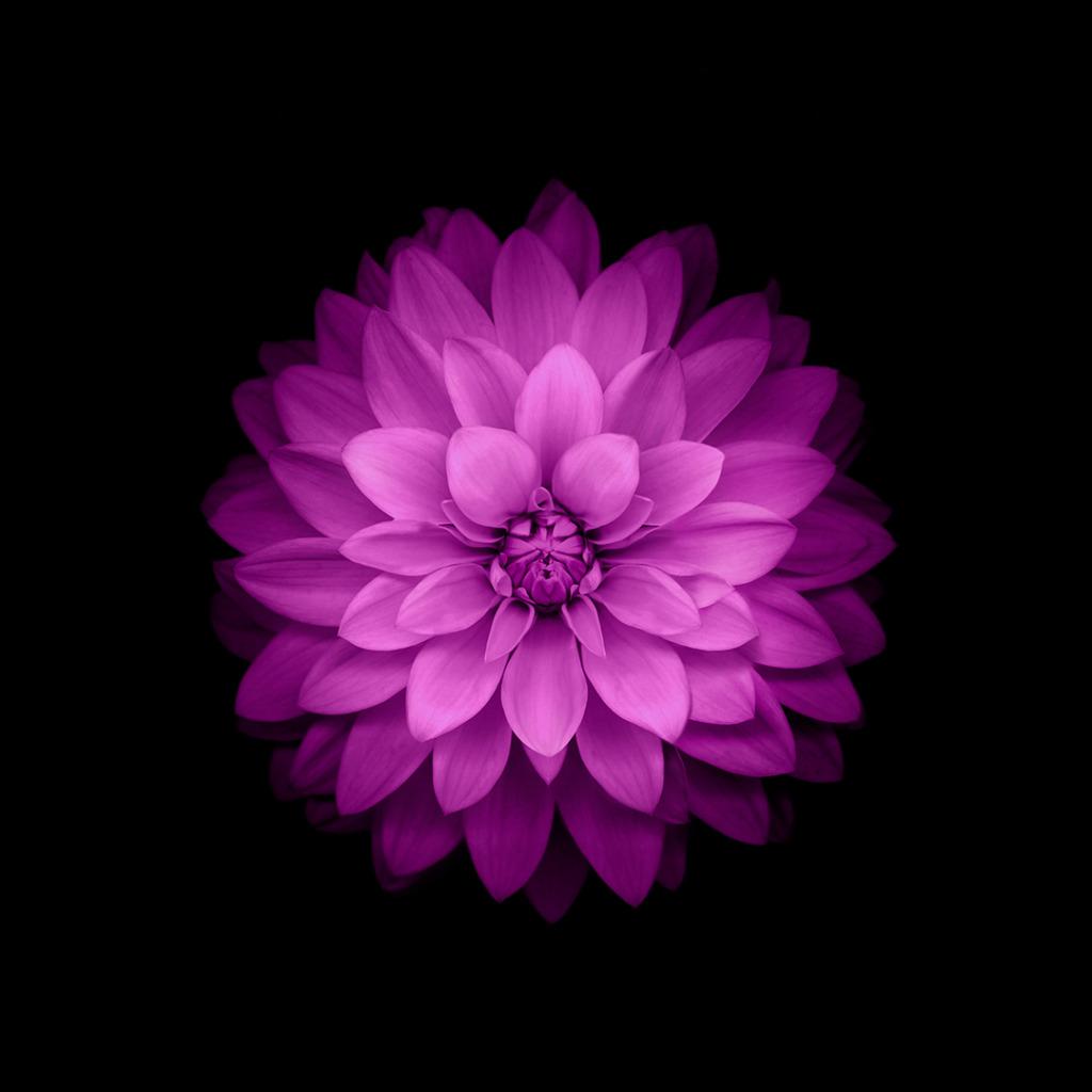 скачать программу цветок