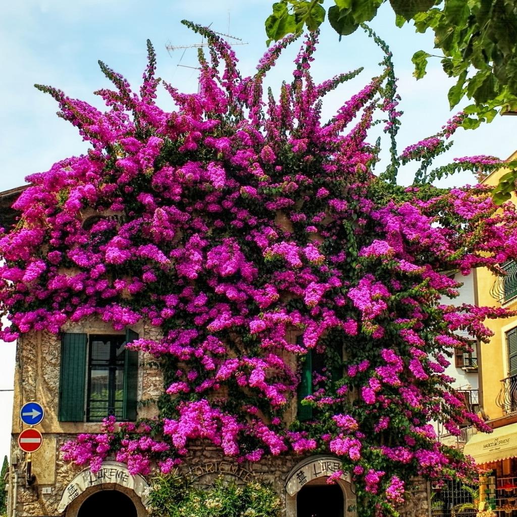 Фото домов с цветами италия