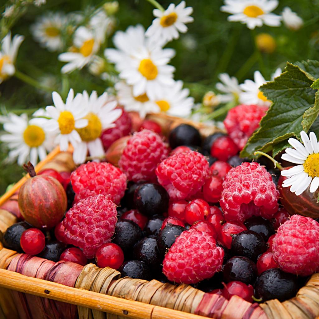Днем, картинки цветов и фруктов ягод
