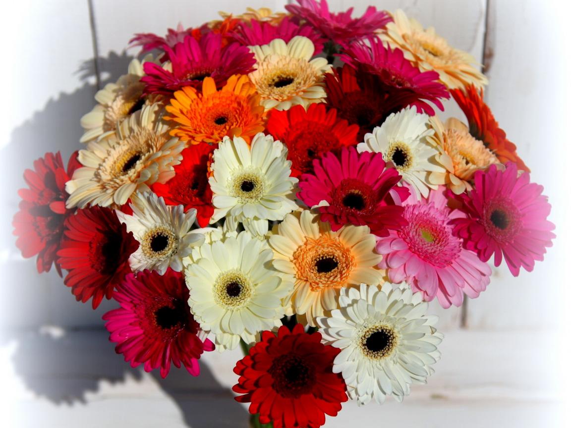 Фото гербера цветы букет