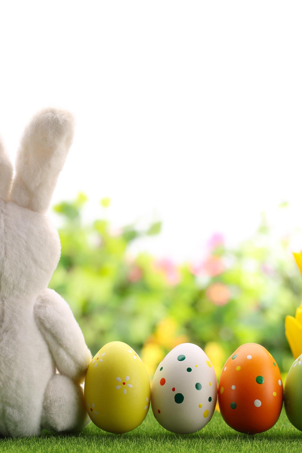 природа кролик цветы тюльпаны яйца пасха  № 271718  скачать
