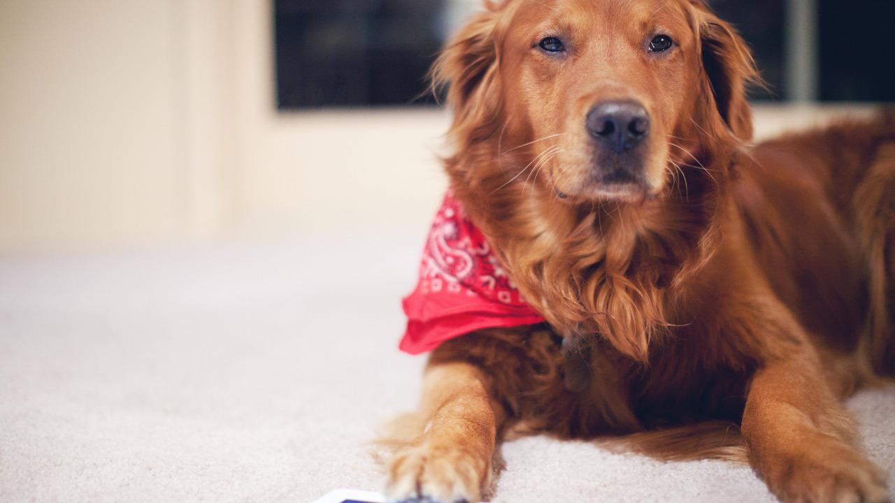 Я поворачиваюсь, а за дверью рыжеватая собака тоже большая, я бежать, а она как бы преследует меня, но не гавкала и не кусала.
