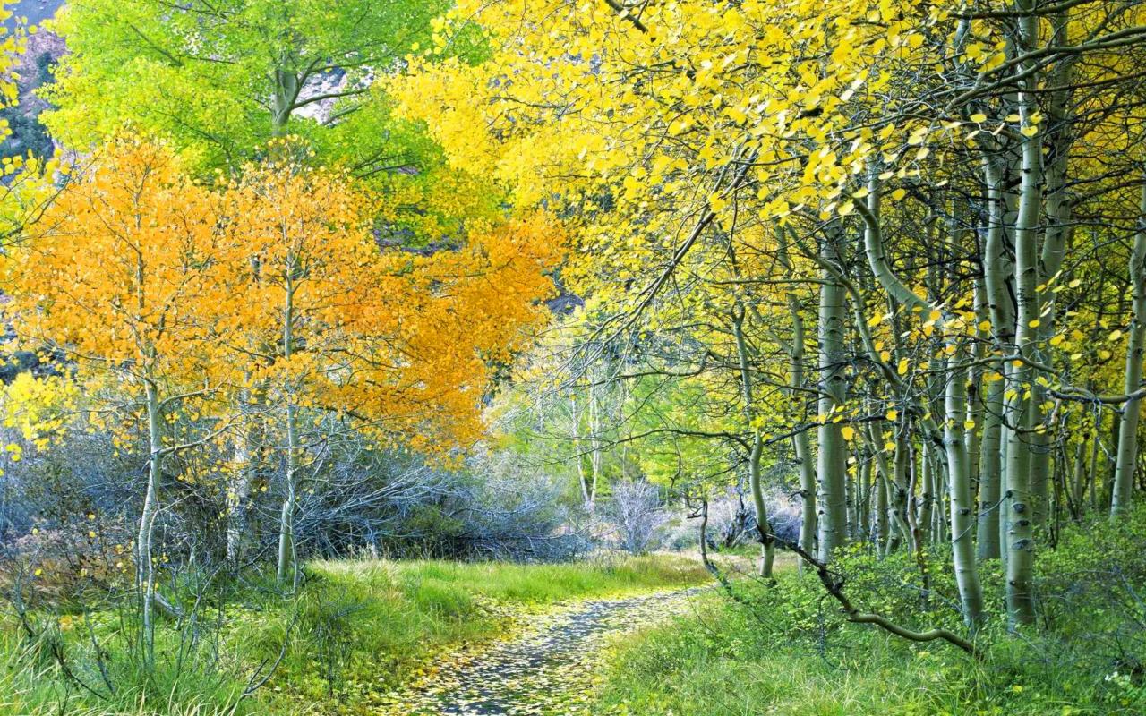 Картинка про осенний лес для детей