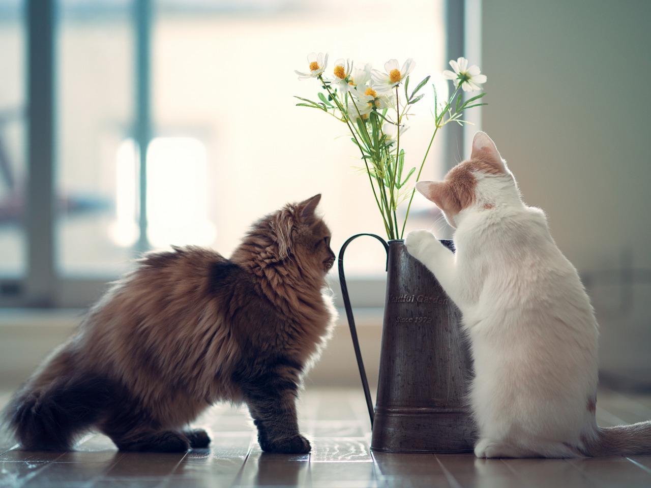 жизнь одной кошки в картинках вверху