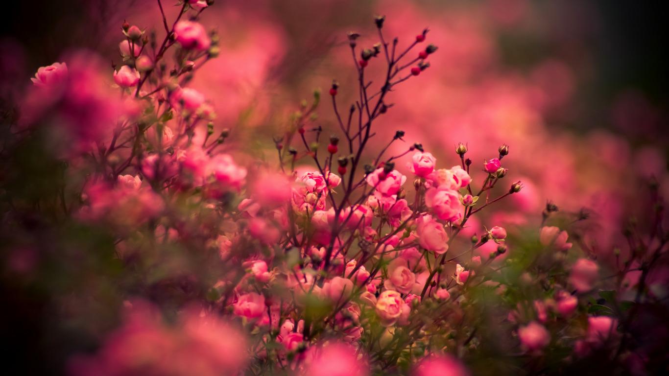весенние цветы обои на рабочий стол 1920х1080