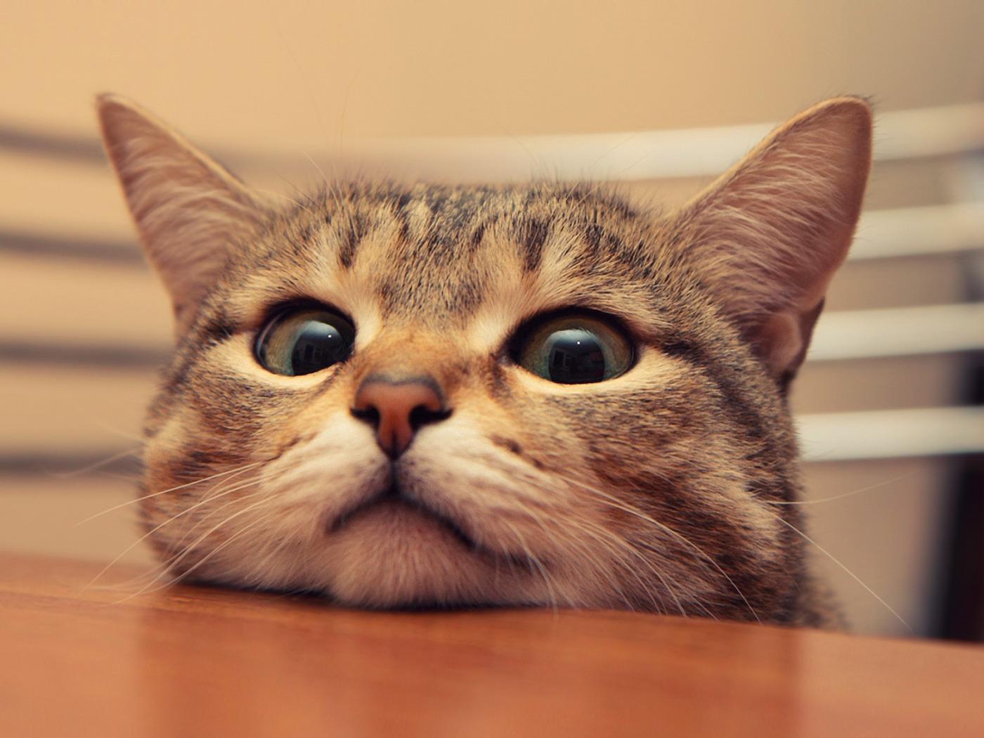 Добавить открытки, обои смешные кошки на рабочий стол