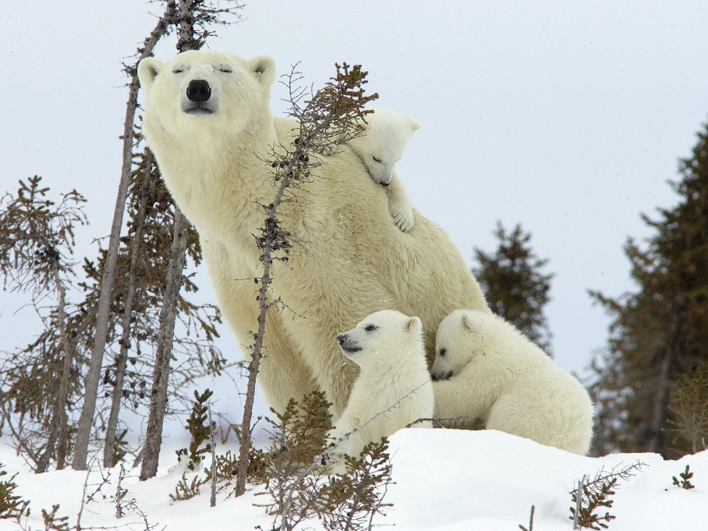 Картинки, картинки зима животные любовь