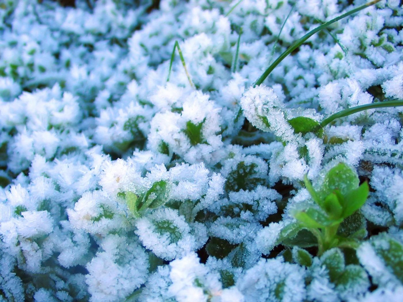 Картинки зима цветы