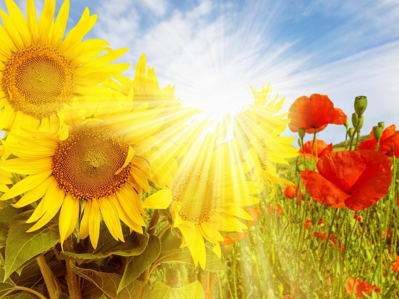 объявления картинки с днем рождения солнце с цветами официальный сайт