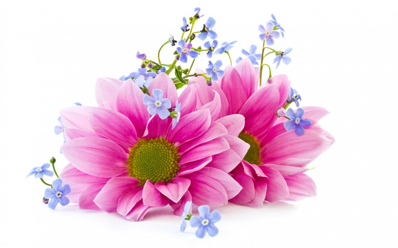 http://img3.goodfon.ru/original/1440x900/4/b2/cvety-lepestki-flowers.jpg
