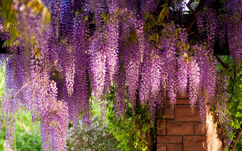 Многолетние цветы лианы для дачи фото с названиями каталог
