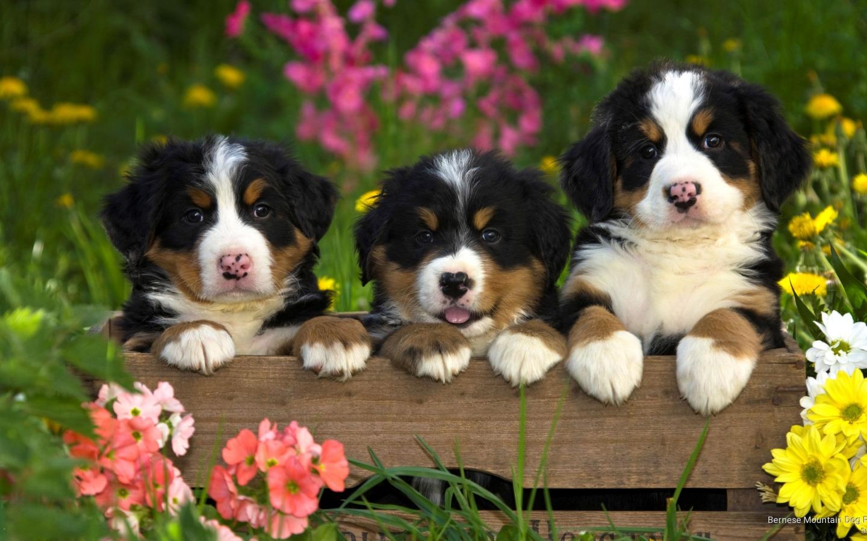 Картинки животные собаки природа цветы