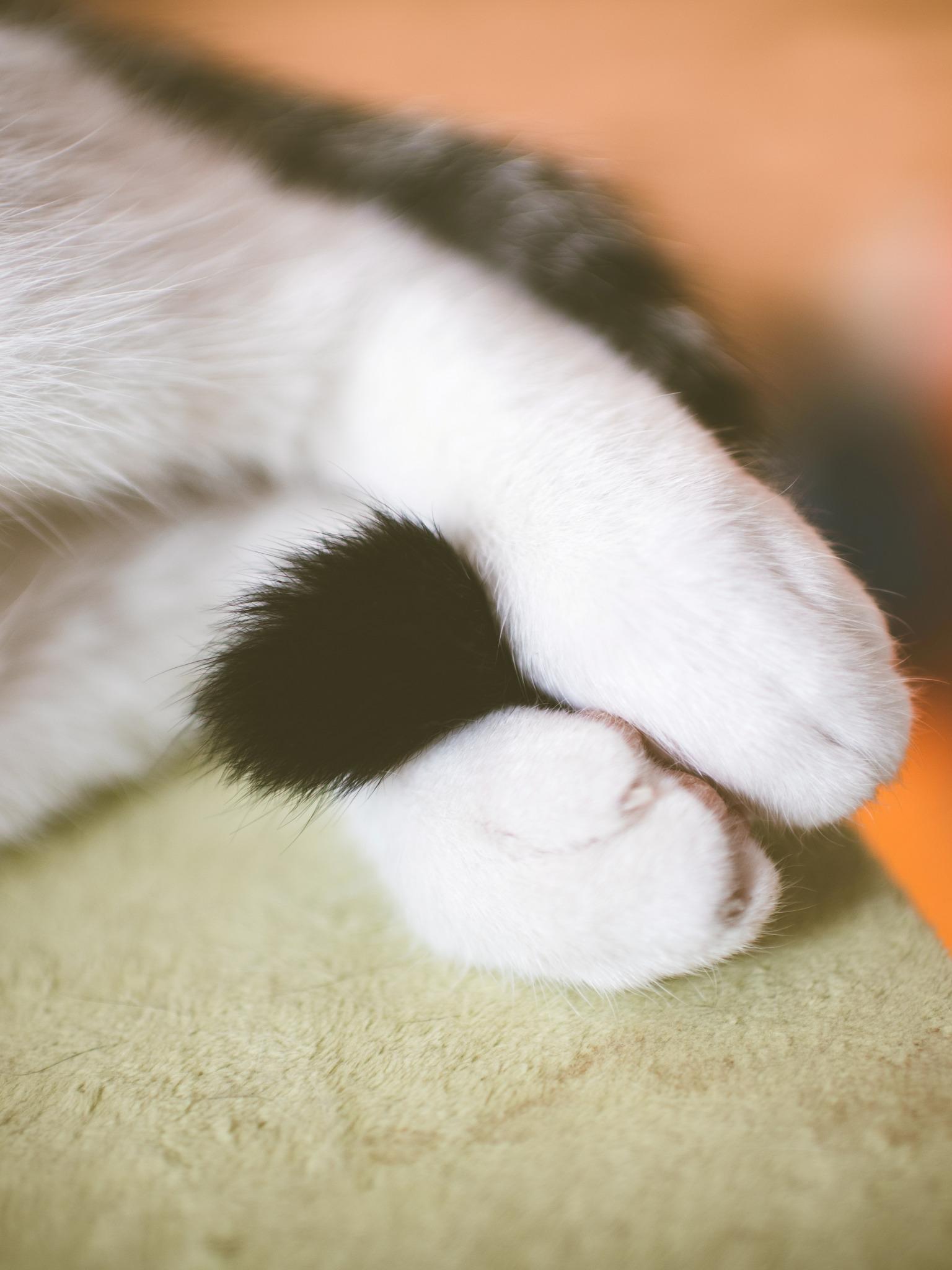 Хвостик кошки 39