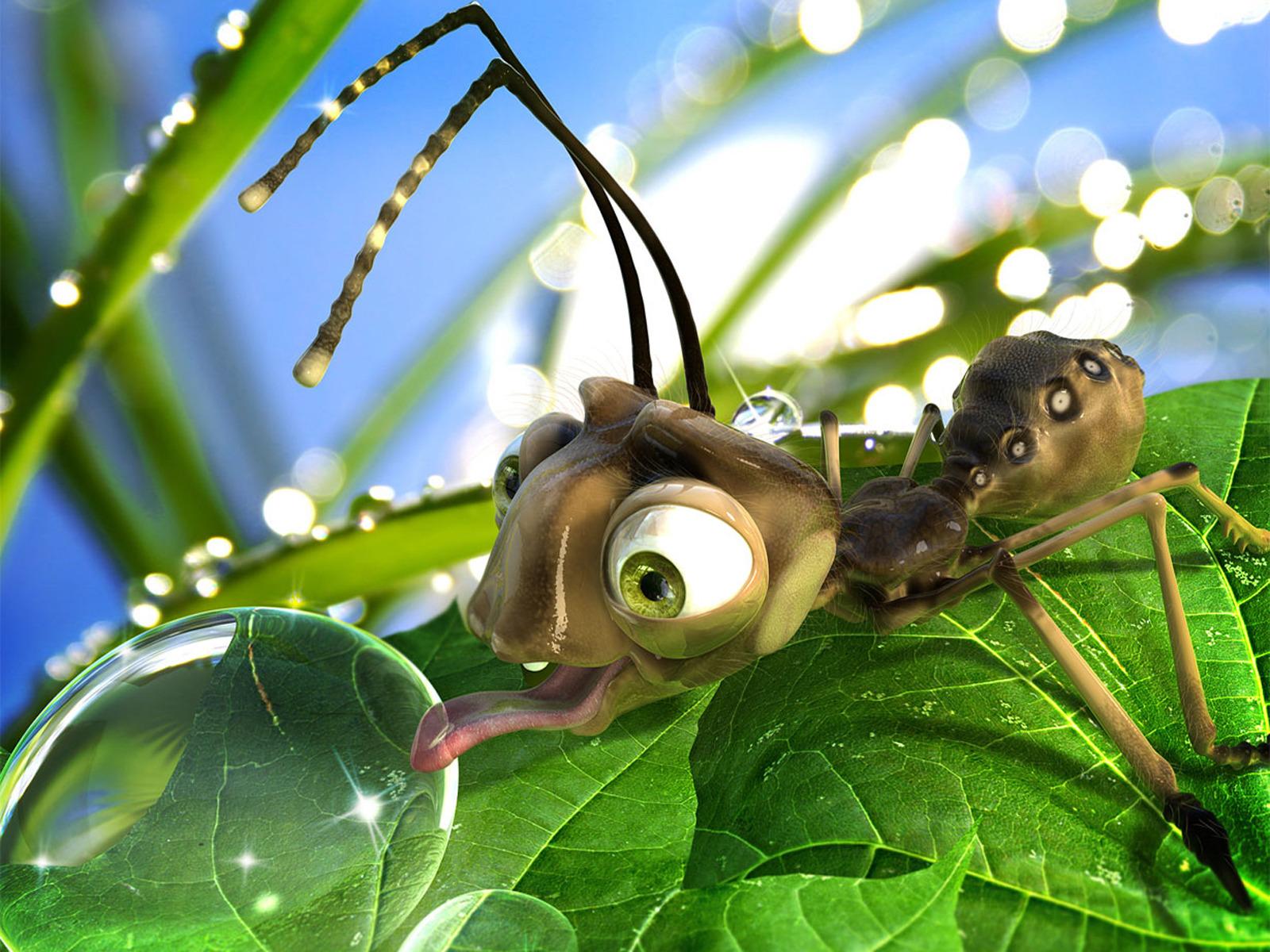 Днем рождения, прикольные картинки насекомых на рабочий стол