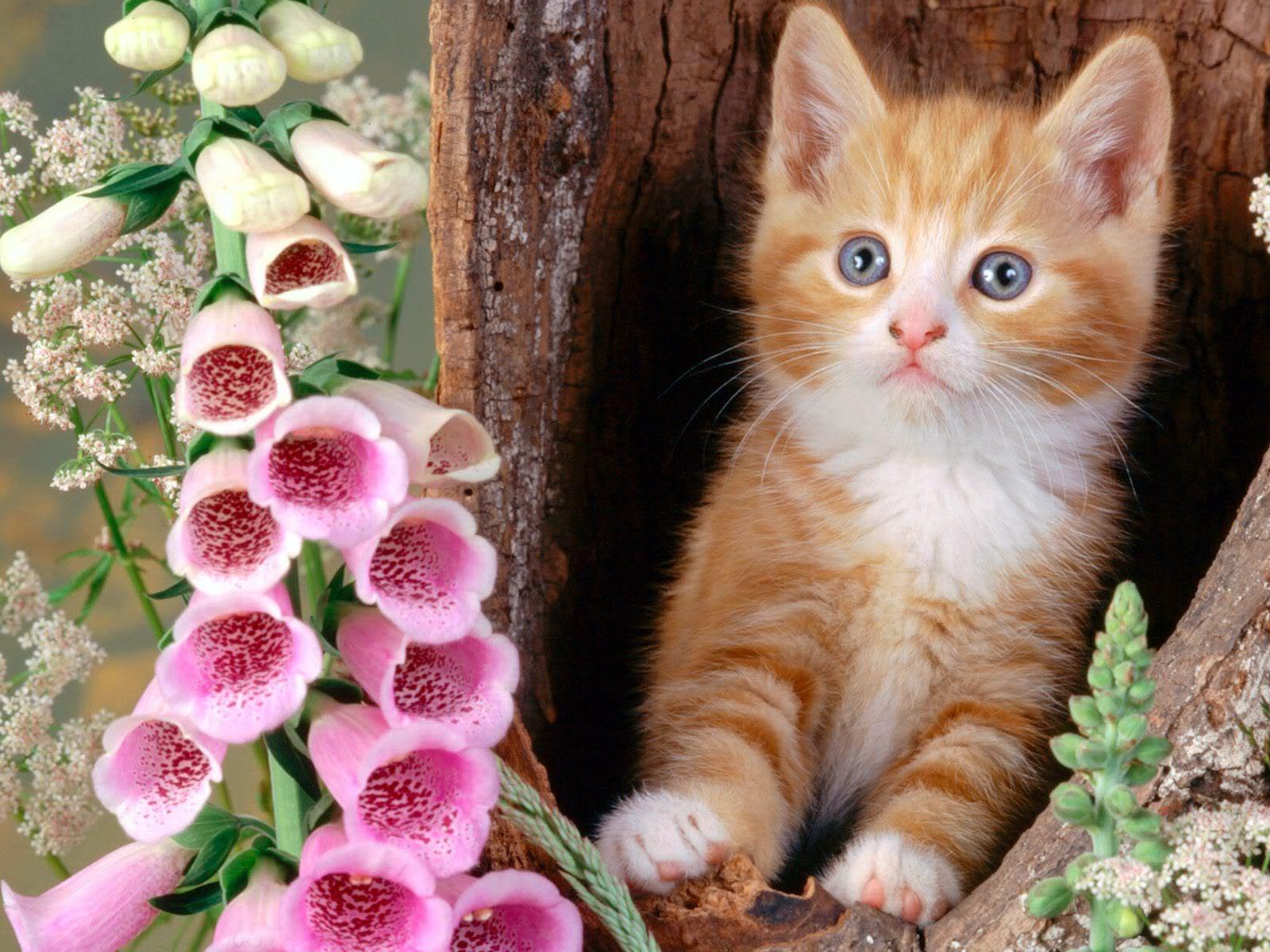 поискать картинка красивая кошка нежная швейцария