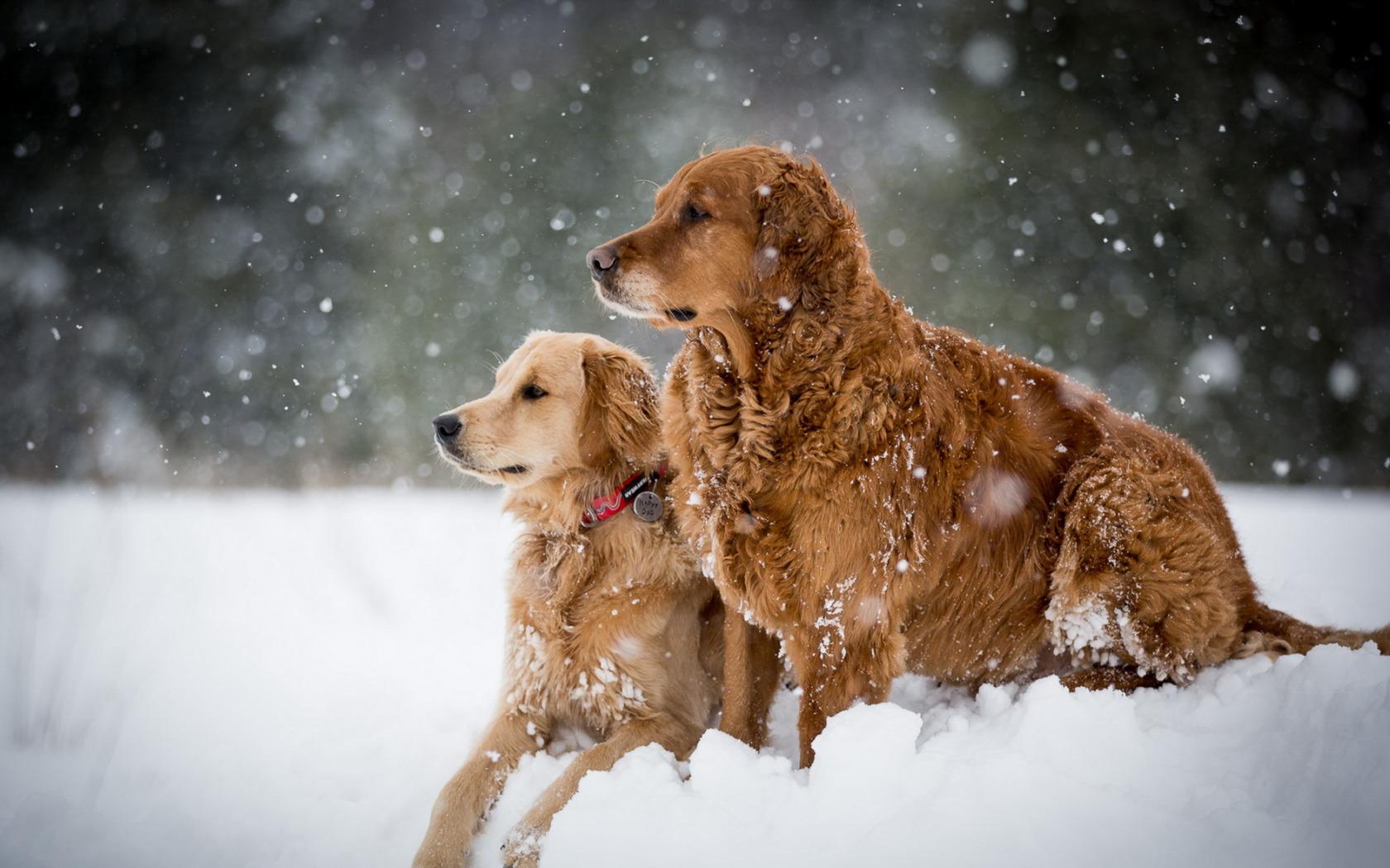 собачки на зимней прогулке  № 1978642 без смс