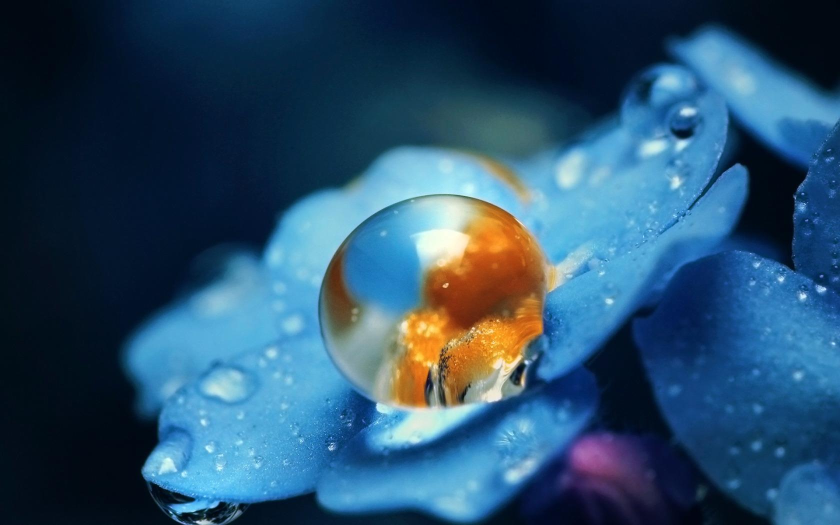выражаем фото капли воды высокого разрешения на цветах прекрасно подойдет