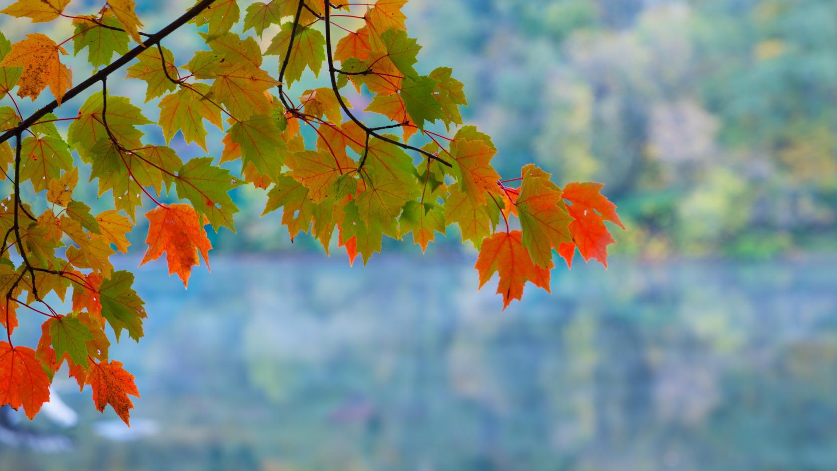 Обои для рабочего стола листья осени
