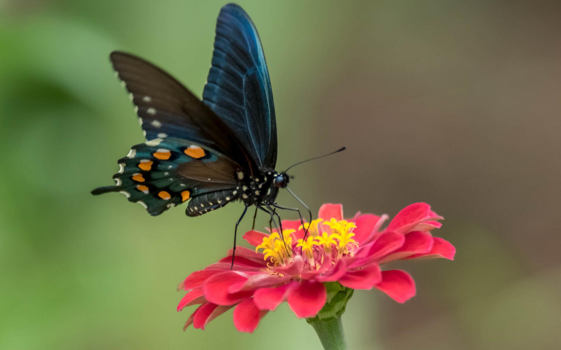 Цветок мотылек