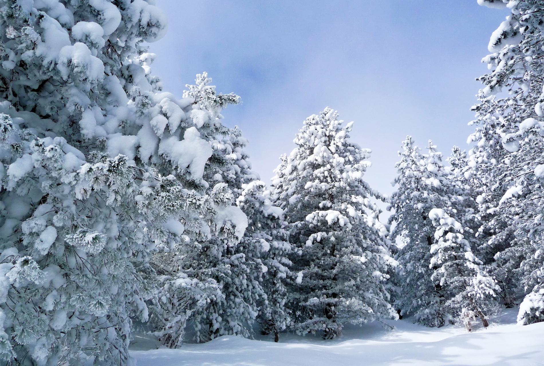Картинки, картинка зима в лесу