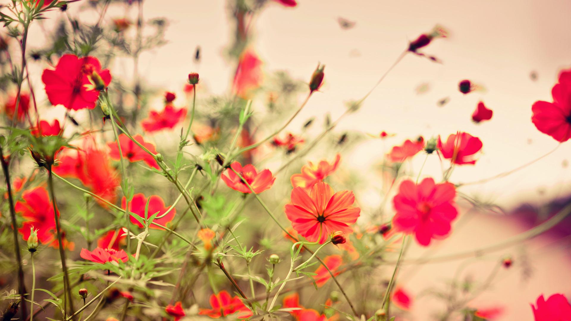 картинки цветы на рабочий стол большой формат частоту падающего