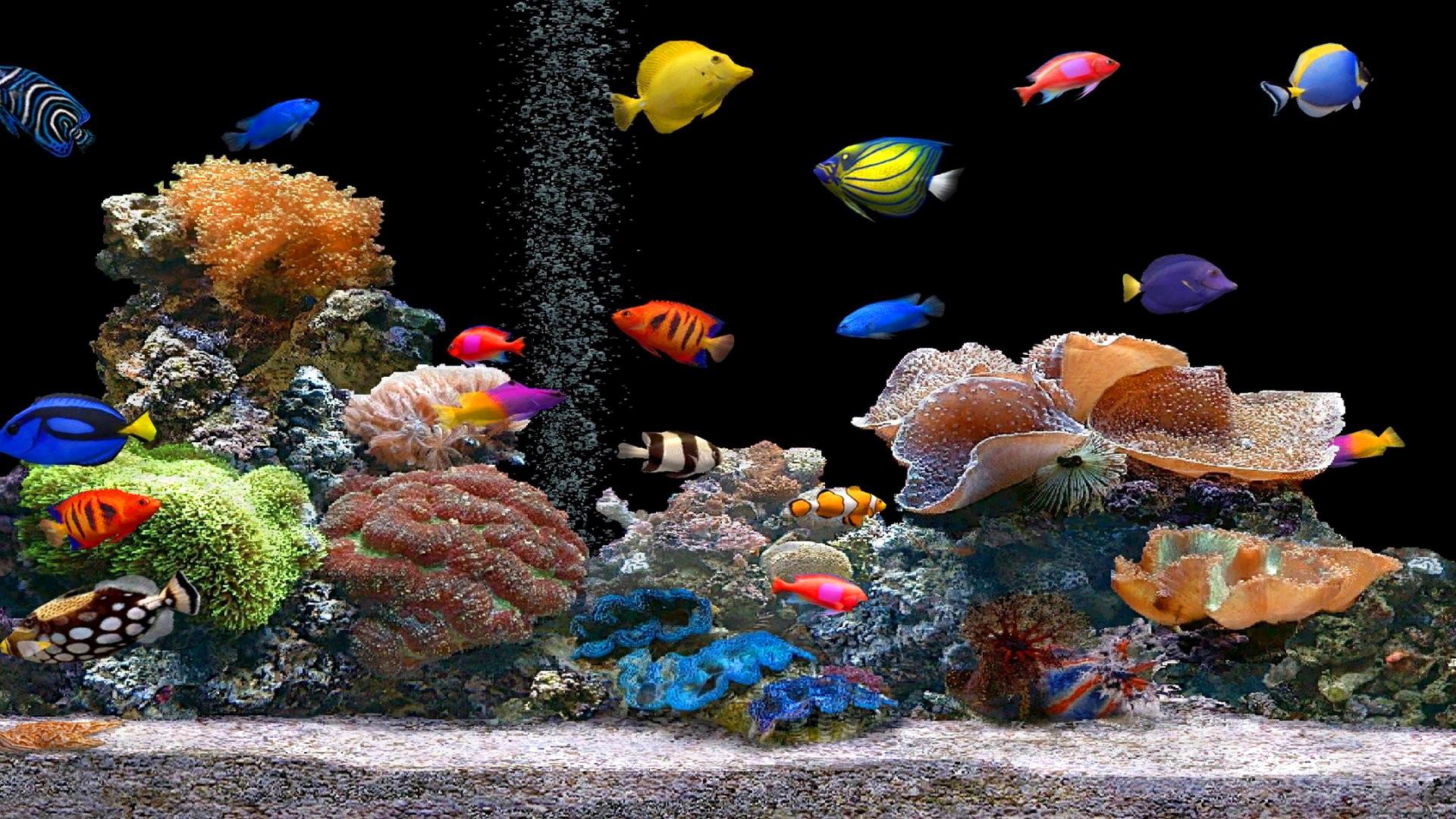 обои на рабочий стол анимация аквариум так вот, девятилетний