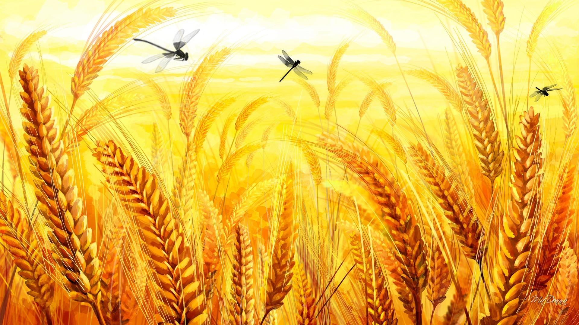 келоидные зерновые картинки для презентации фото восточная