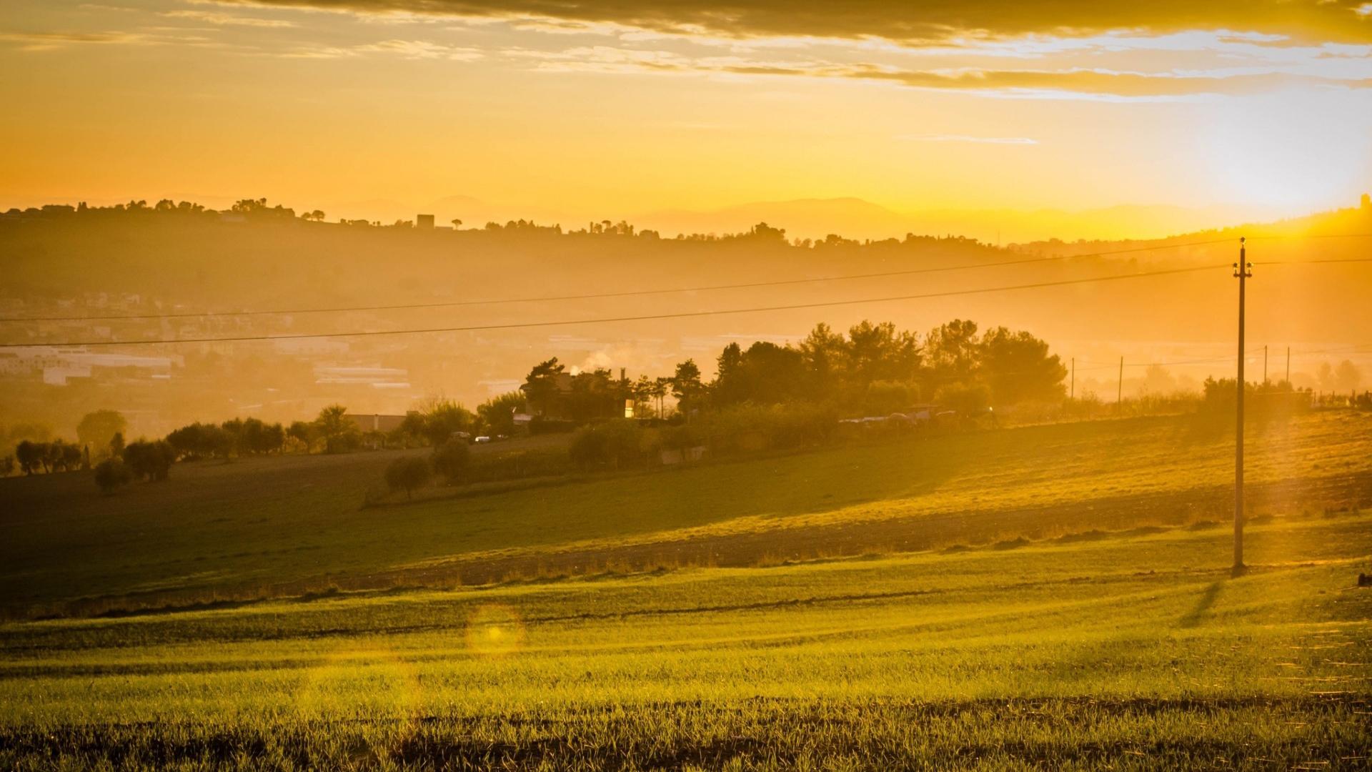 фотографии утреннего поля галуном