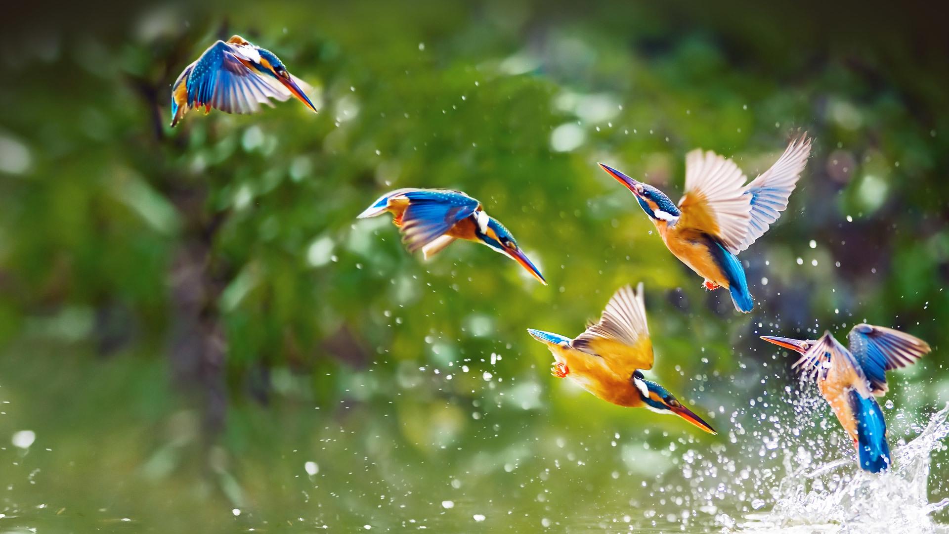 птицы фото для смартфона удивительной форме окраске