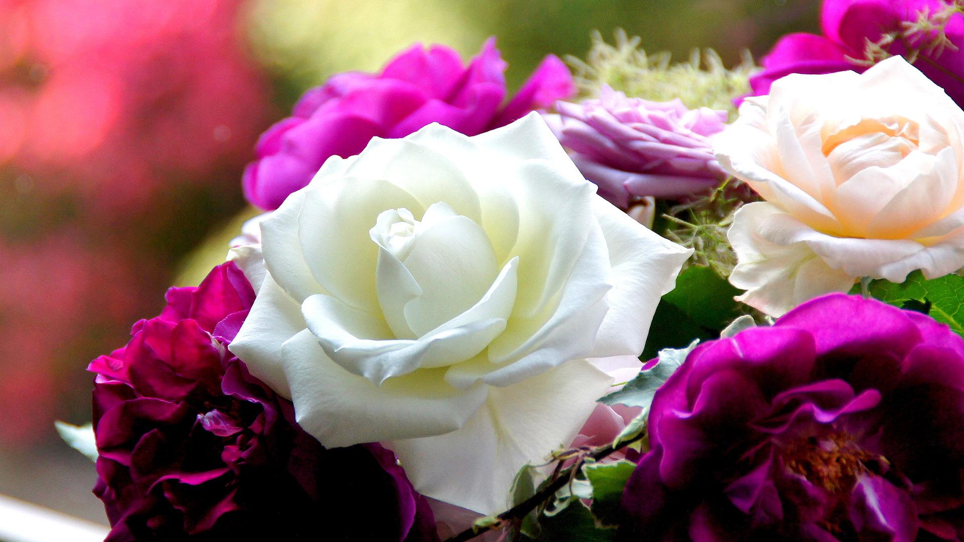 затем переделали красивые розы фотографии большие комплекте