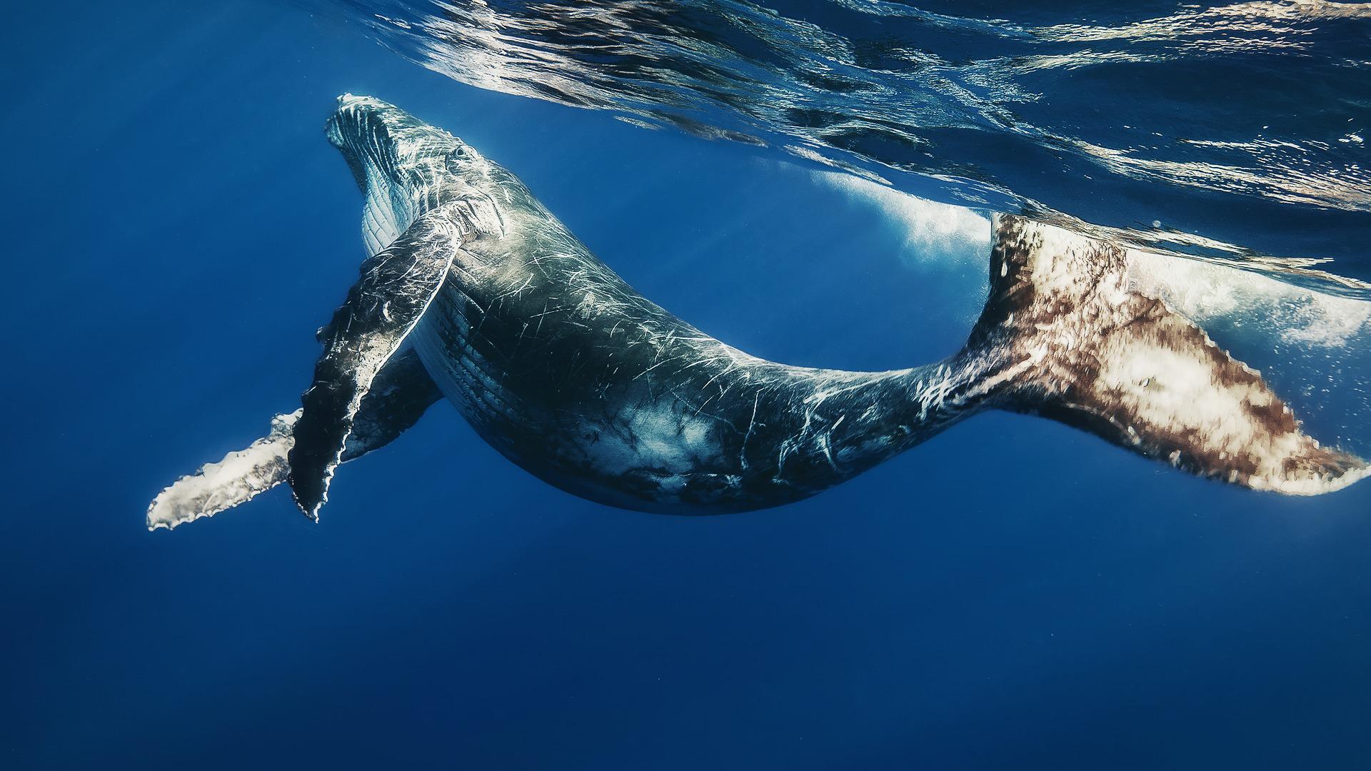 Картинки с китами на рабочий стол