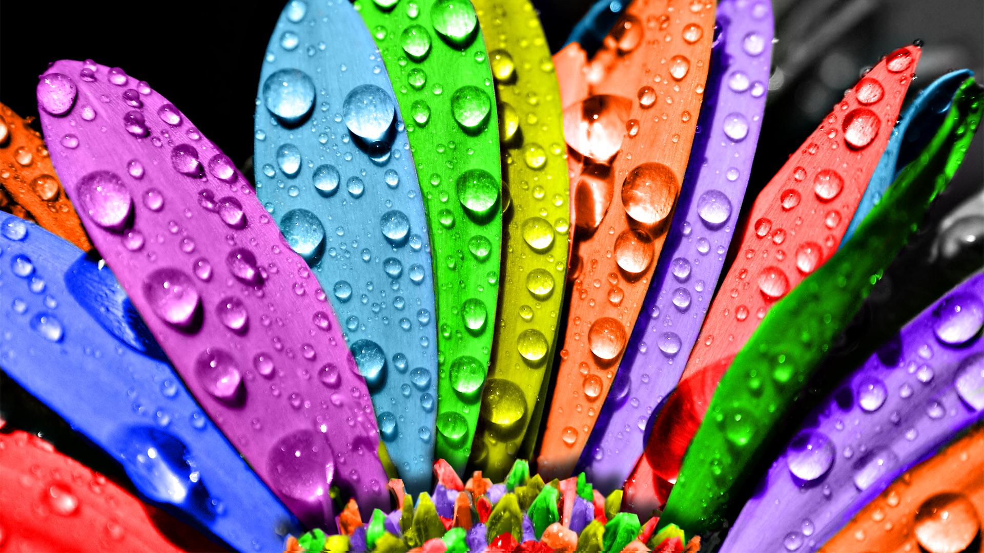 трех красивые разноцветные картинки на обложку телефона предприятии, как любая