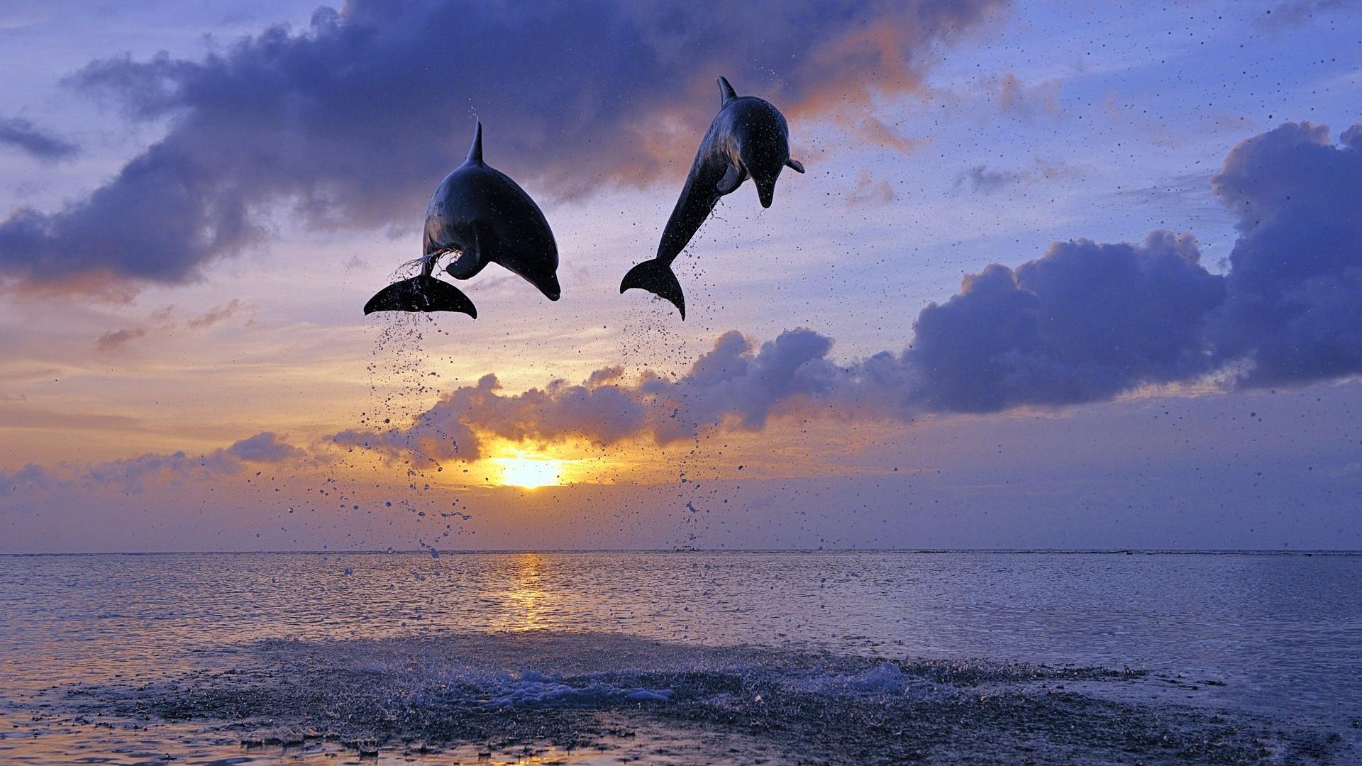 картинки дельфины море солнце комиксах гвен