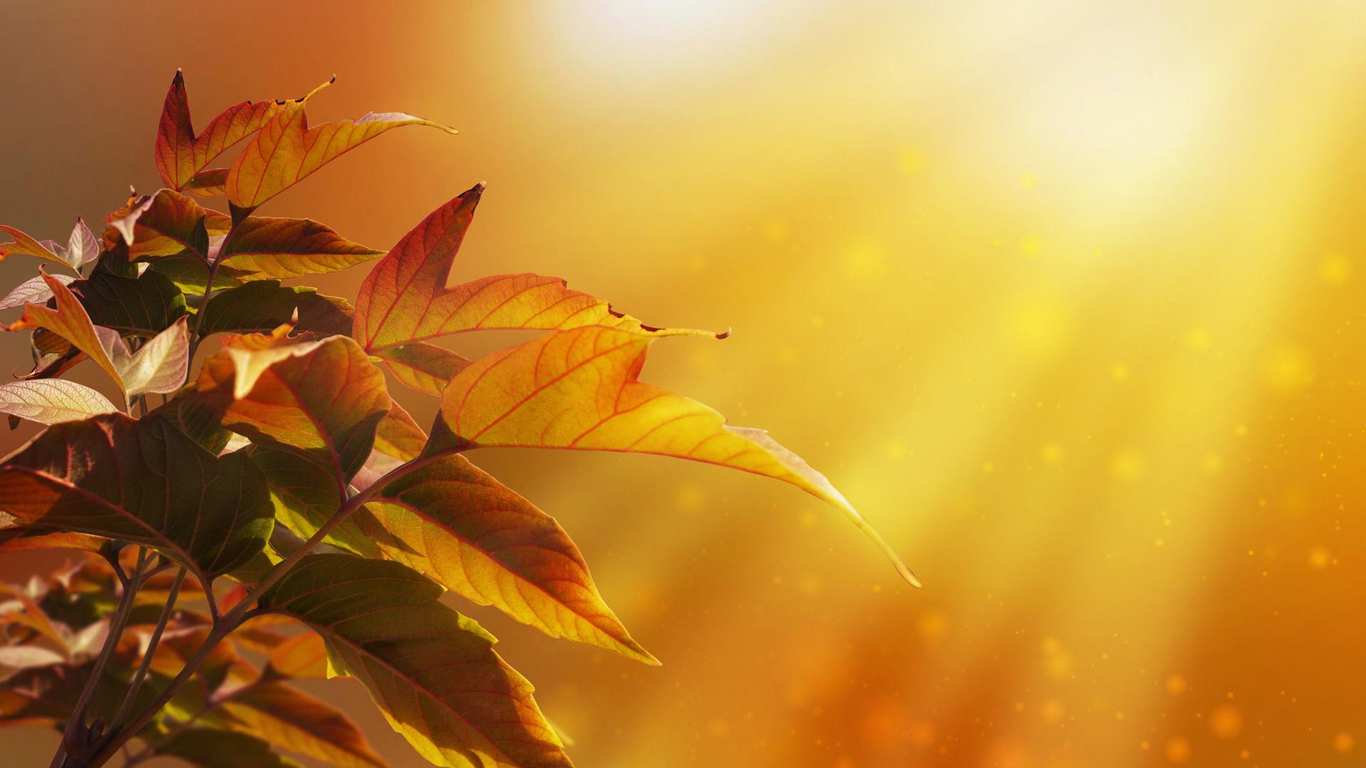 Картинка анимацией, открытки листья осень