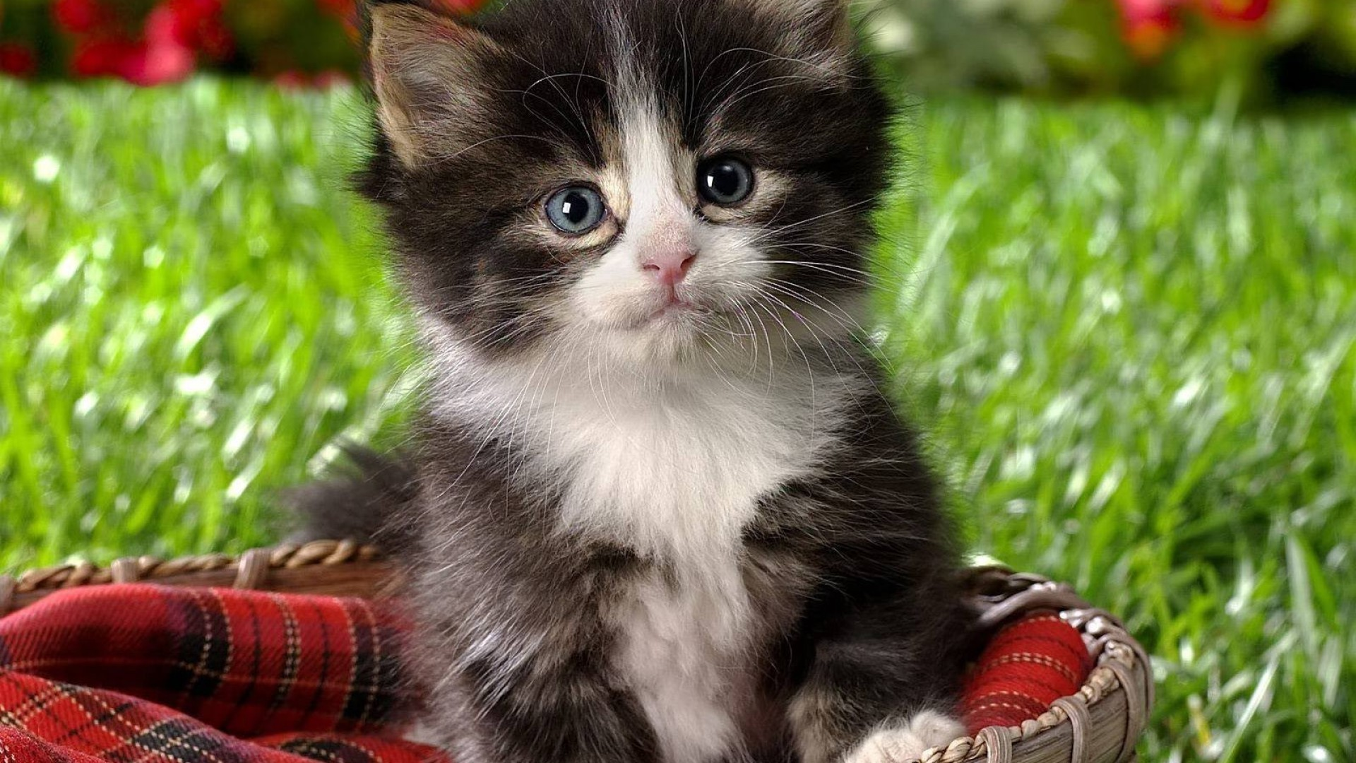 Картинки котят и кошек на телефон