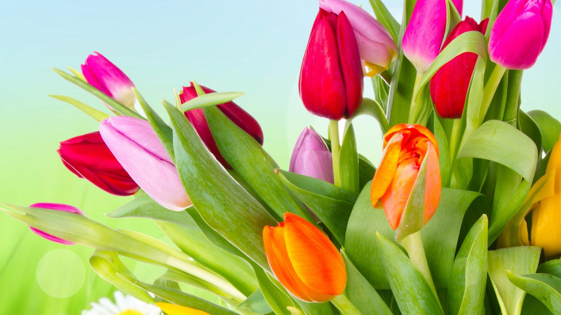 картинки на рабочий стол весенние тюльпаны праздник ждут только