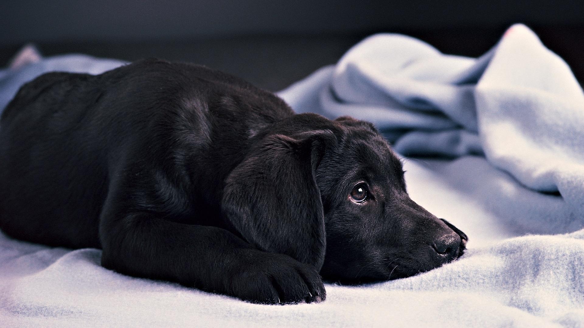 Черно-белый пес на полу  № 1157322 бесплатно