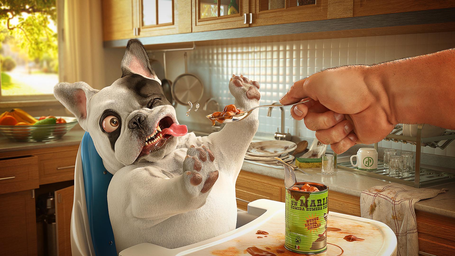 Собака хозяин корм обед обои фото