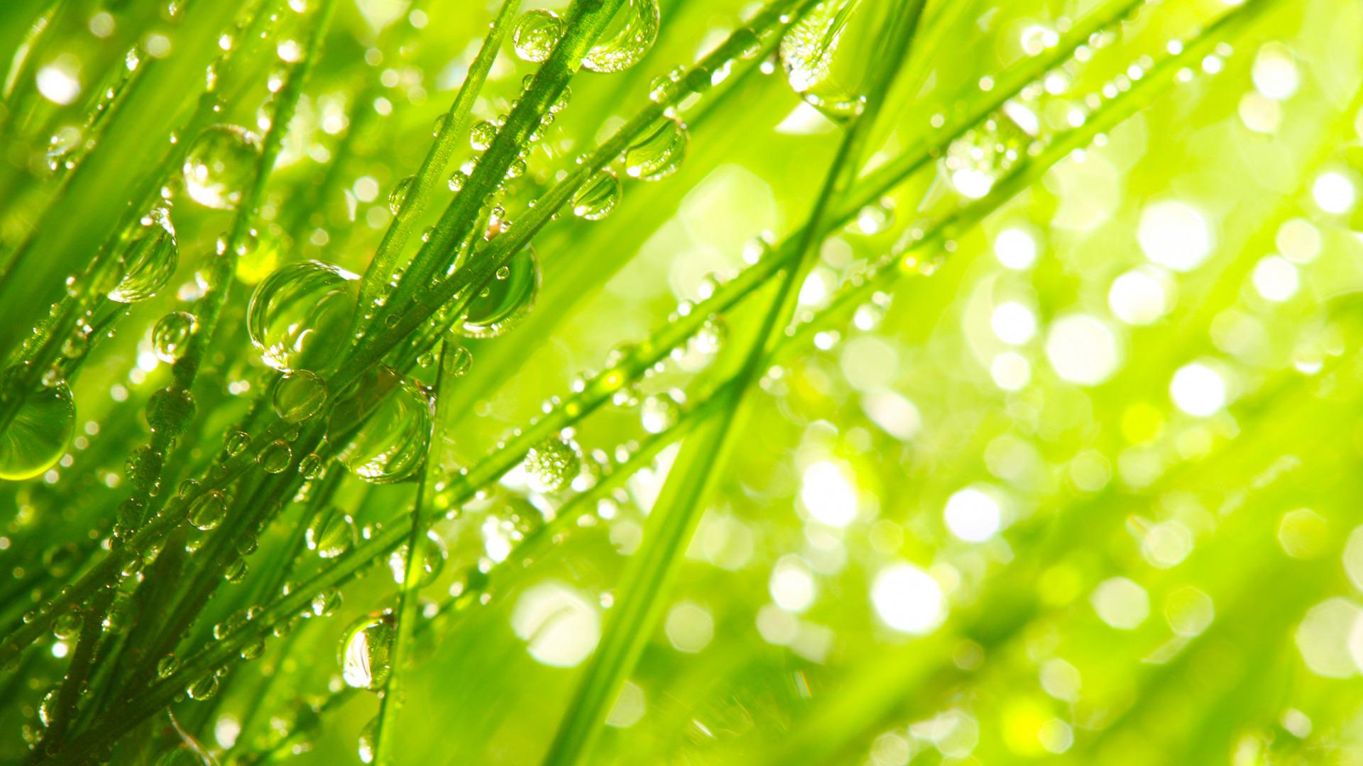Картинки на рабочий стол трава зеленая