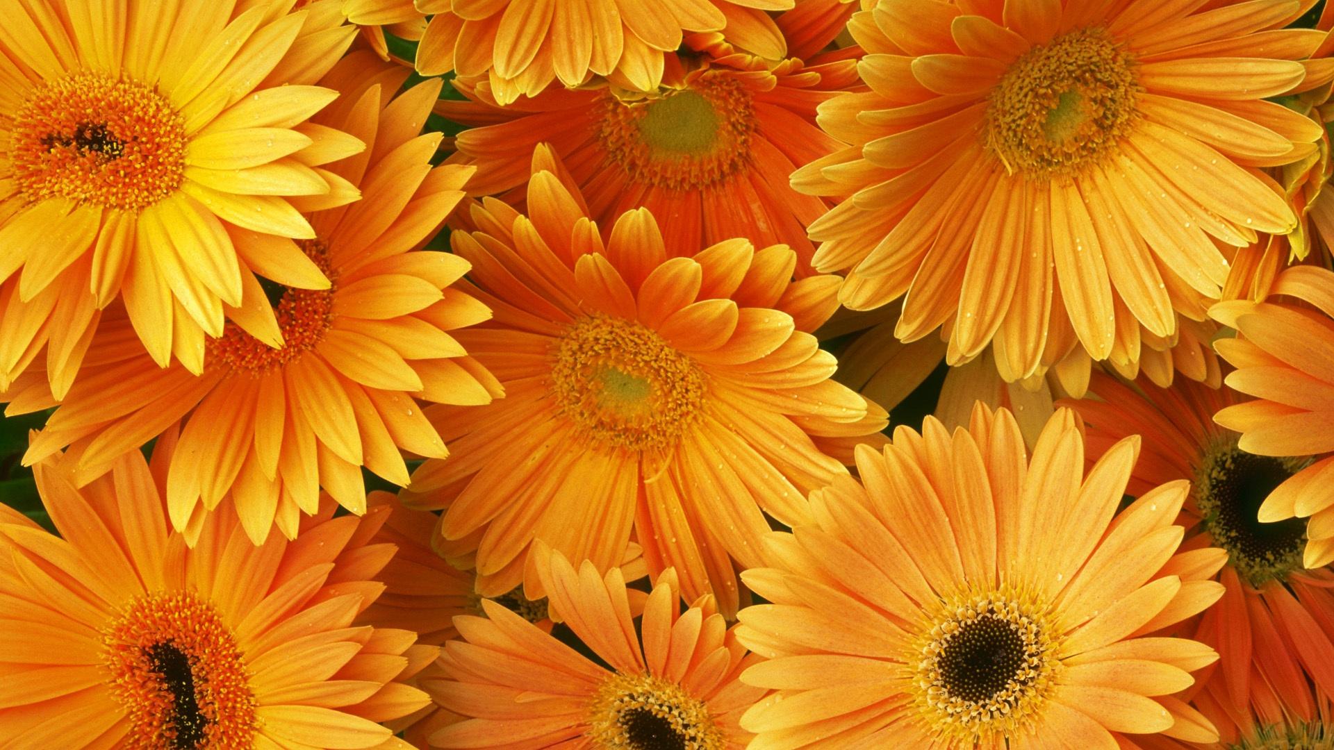 Цветочки картинки для рабочего стола