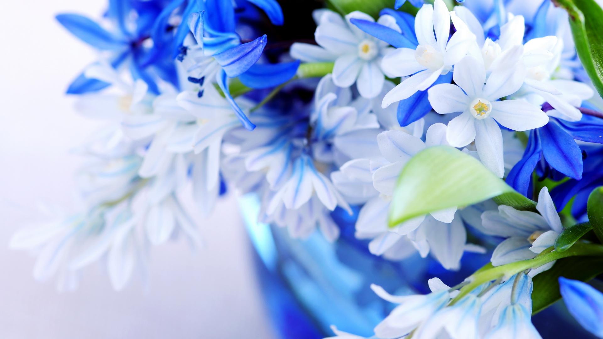 природа синие цветы nature blue flowers  № 1376512 загрузить