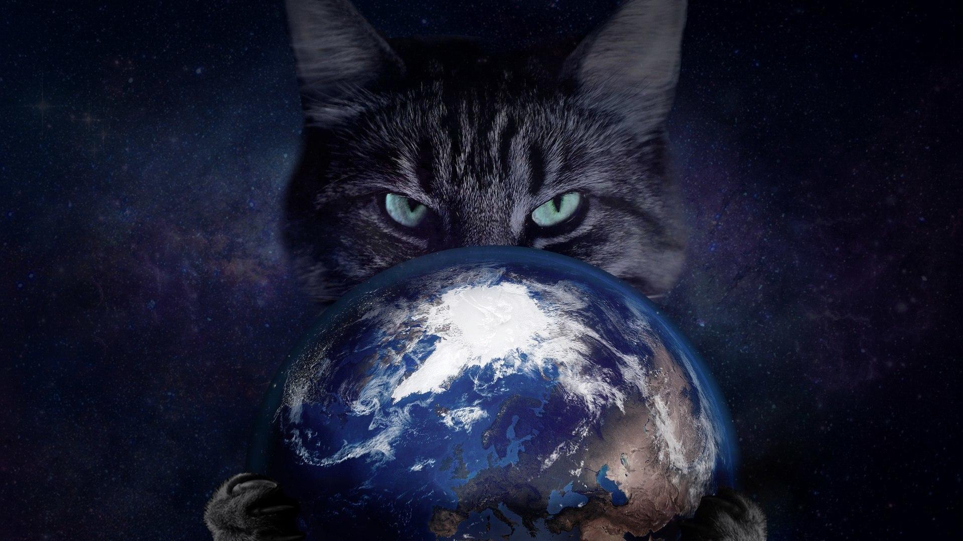 картинки с кошками в космосе чем