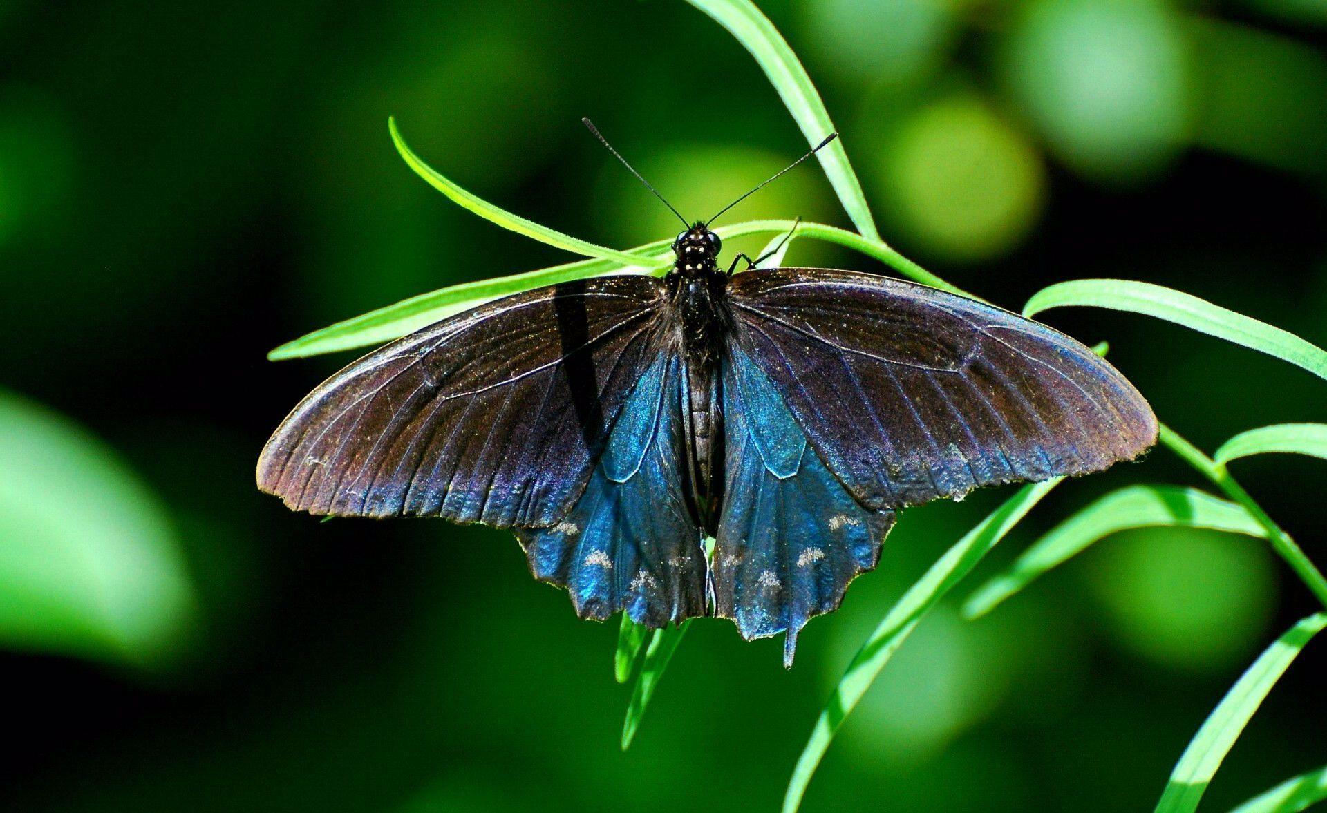 Бабочки растение макро  № 3660296  скачать