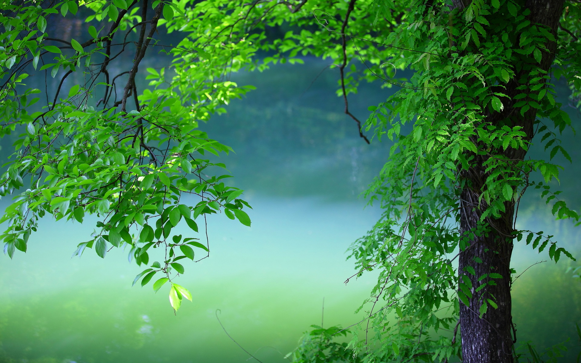 природа деревья ветки листья nature trees branches leaves  № 1275051 загрузить