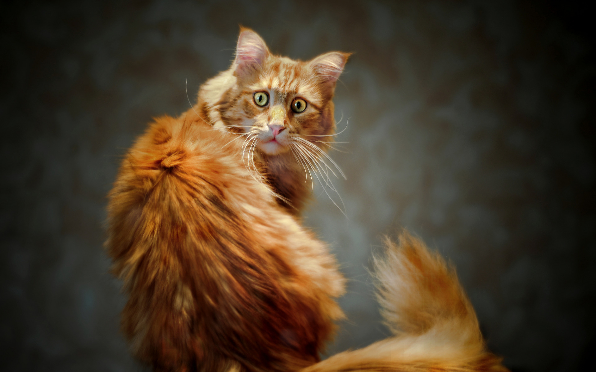 Рыжие прикольные коты картинки, днем рождения для