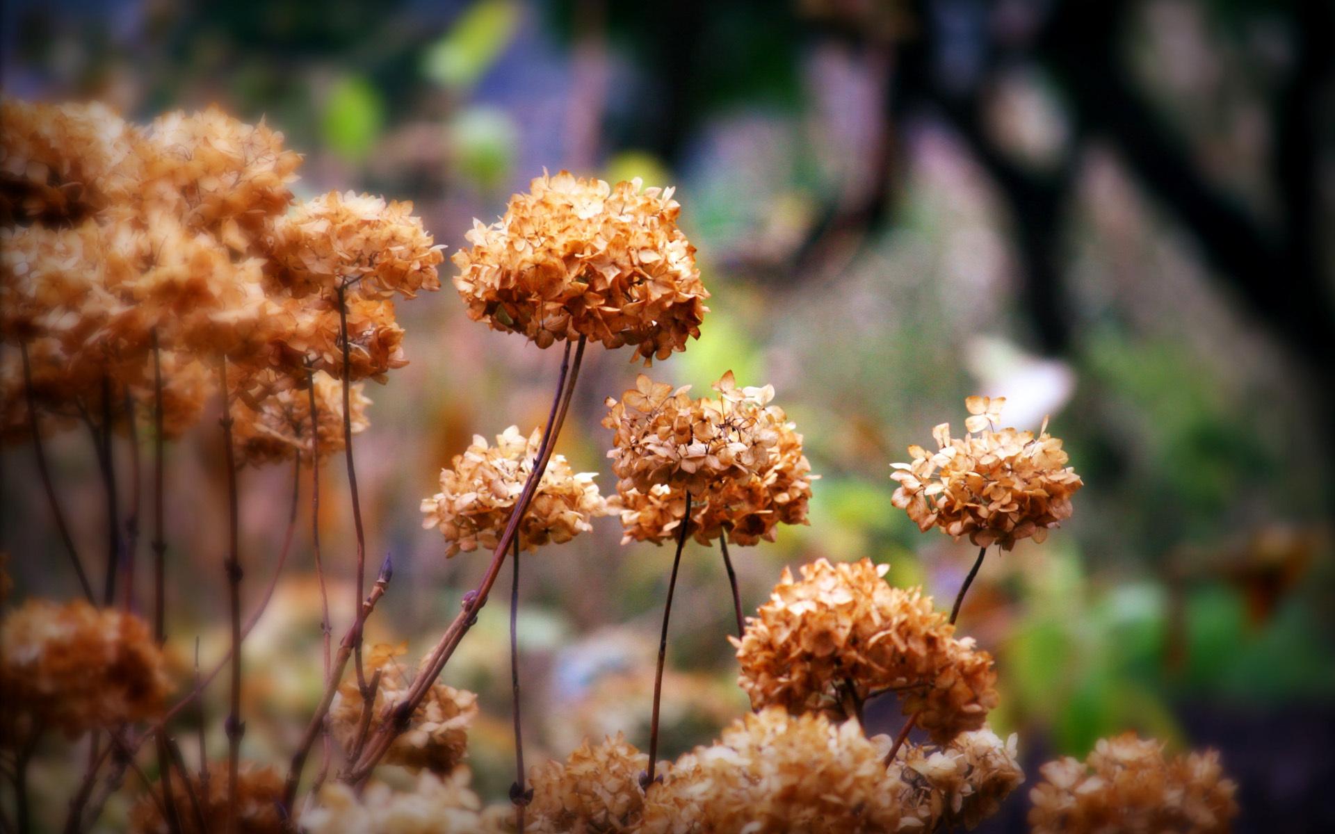 Сухие растения картинки цвет