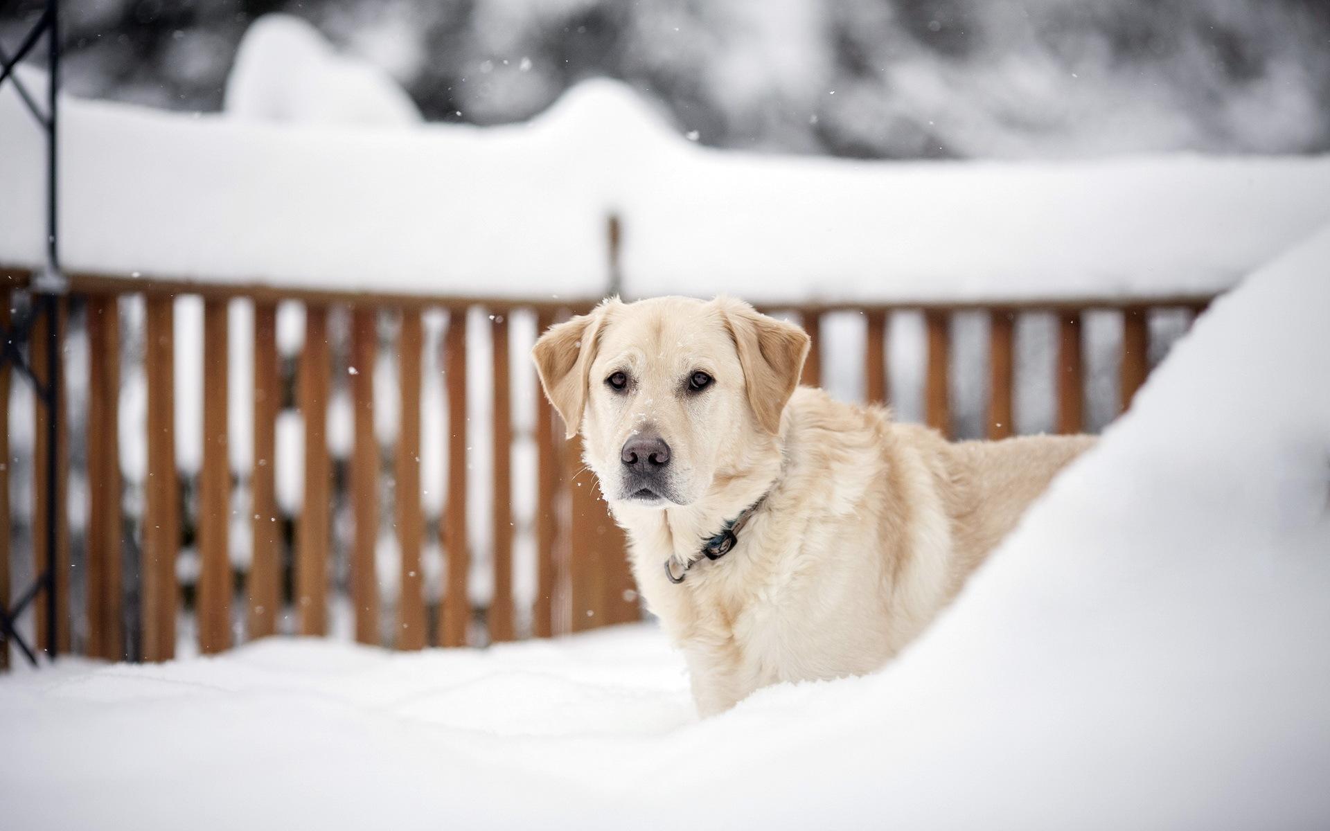 щенок снег puppy snow  № 2001794 без смс