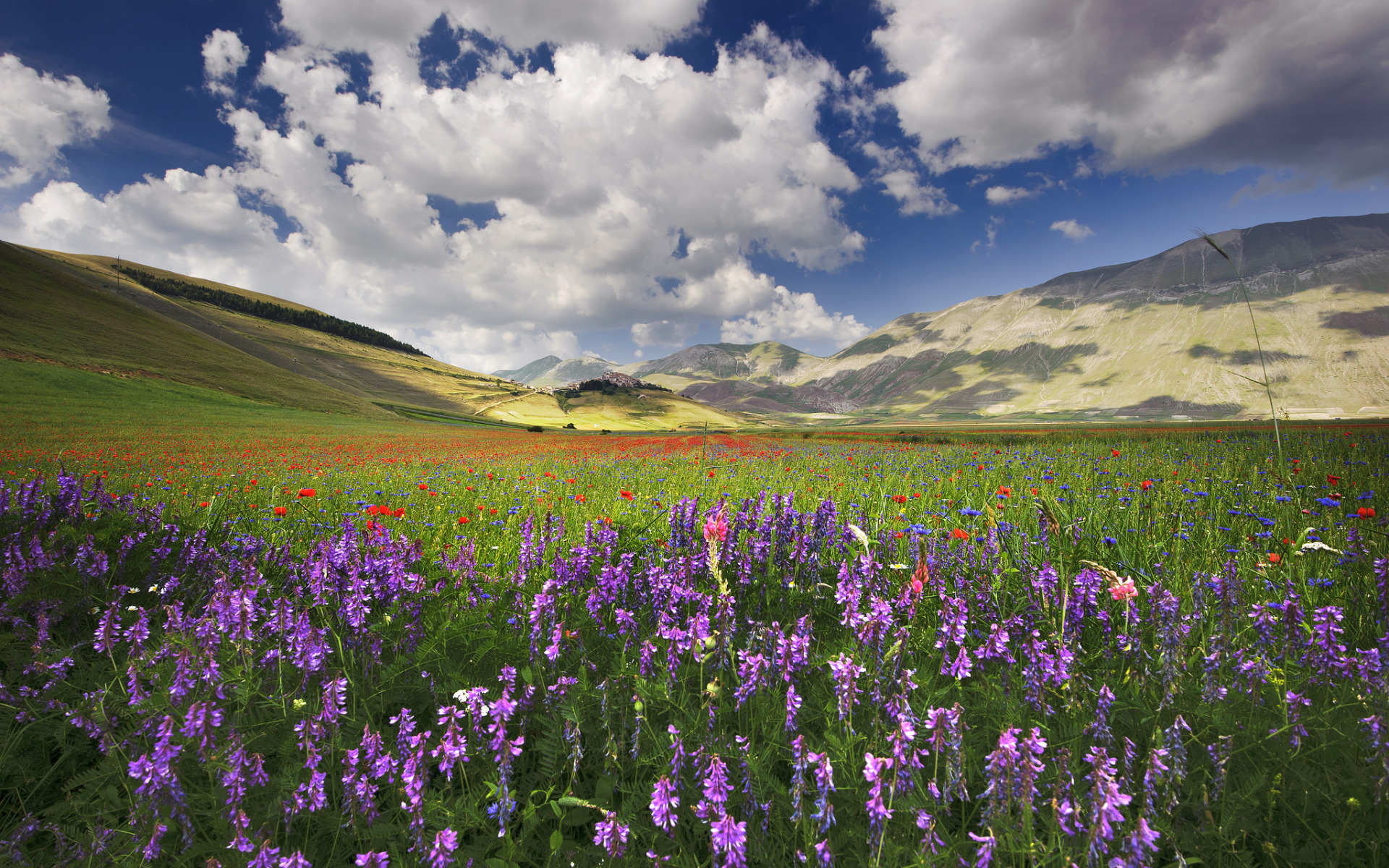 поляна цветы трава холмы горы glade flowers grass hills mountains  № 1829210 загрузить
